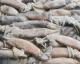 鱿鱼(整条、冻品)