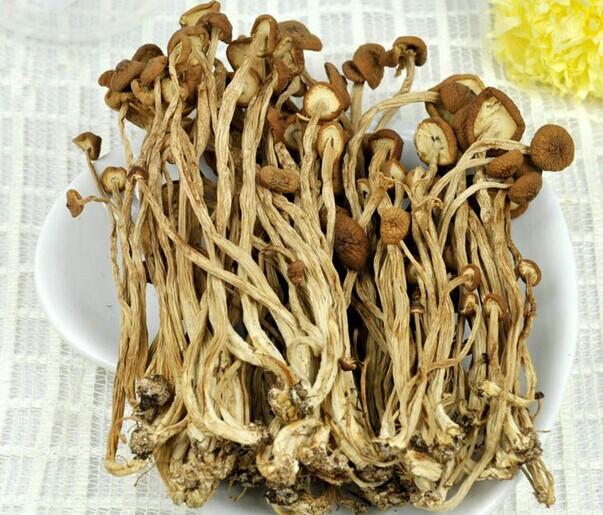 干货茶树菇