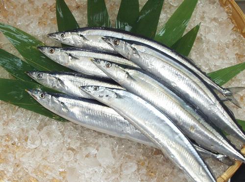秋刀魚(凍品)