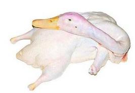 白条鸭(冻品)
