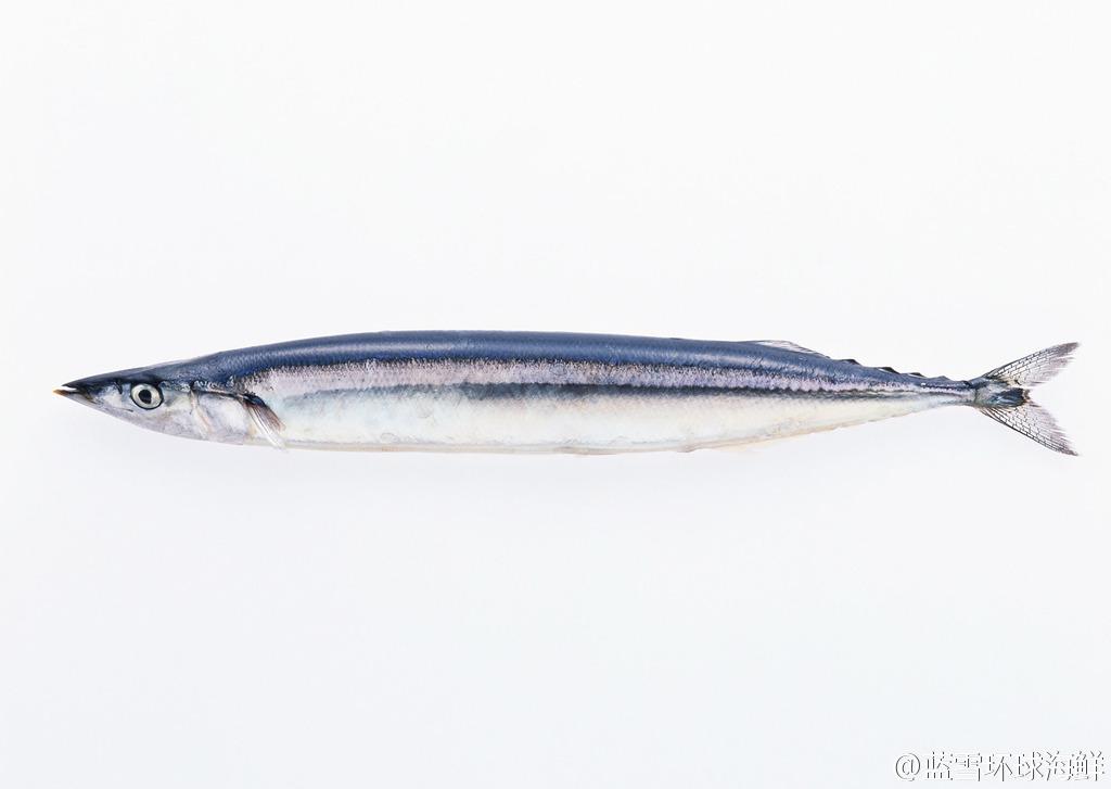 生鲜秋刀鱼