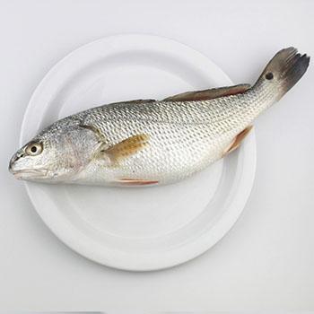 生鮮百花魚
