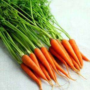 手指胡蘿卜