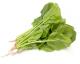 菠菜(大陆)
