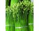 韭菜花(二级)