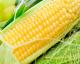 扒皮甜玉米(大个)
