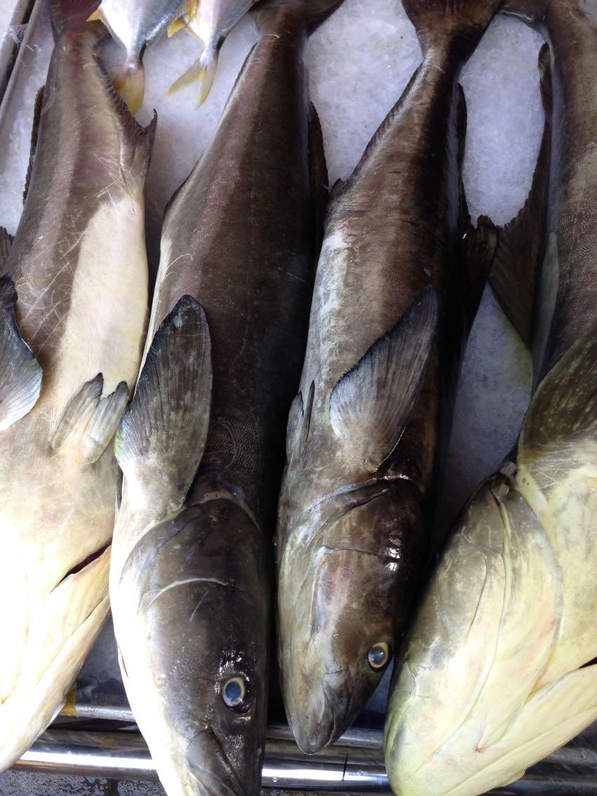 壁纸 动物 鱼 鱼类 852_1136 竖版 竖屏 手机