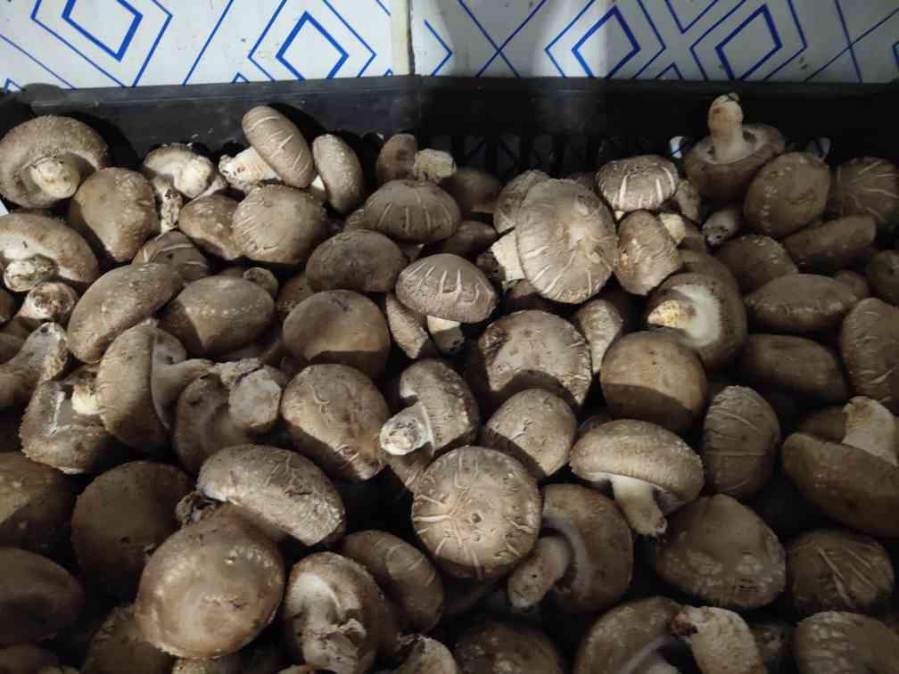 特级鲜冬菇